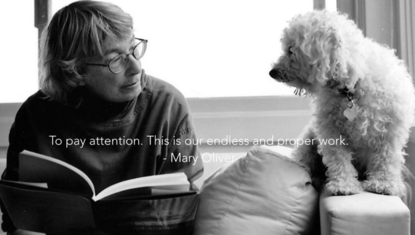 Mary Oliver To Pay Attention Quote